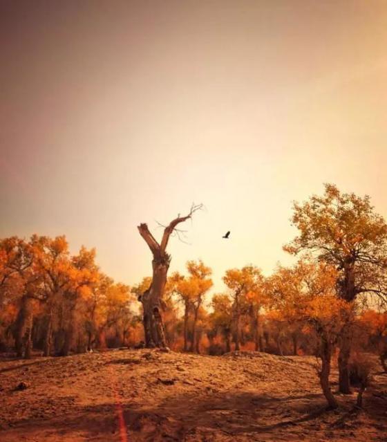 中国最大沙漠腹地 深藏绝美湖泊群