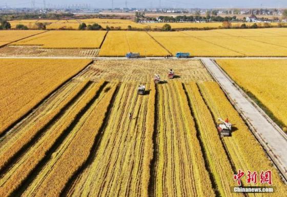 两部门:今年重点支持创建优质粮油等产业园
