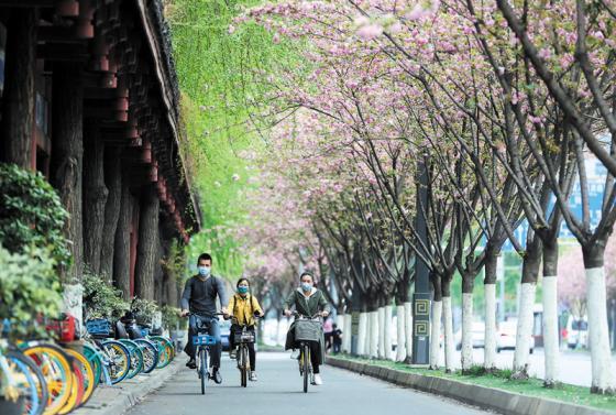 成都:街道上,充满春的气息